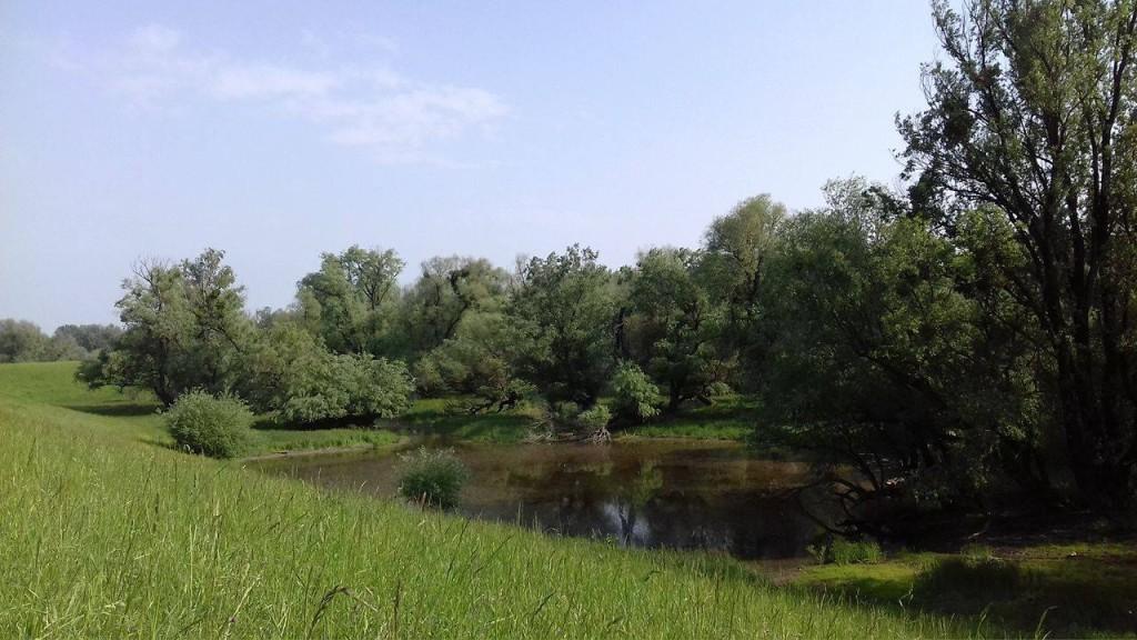 Gombos- a Duna árteróleténél-Tuskós
